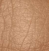 bőrátültetés, transzplantáció