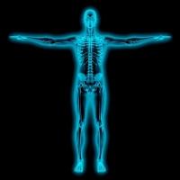 emberi test, szervezet