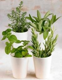 Epehólyag polip kezelése gyógynövényekkel