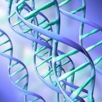 gén, gének, hdl-koleszterin