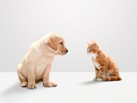 kutya, macska, allergia