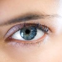 szem, látás, agy