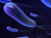Parkinson-kór, Helicobacter pylori baktérium