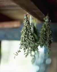 gyógynövények, gyógynövény, szárítás