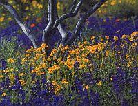 virágok, allergia, pollenallergia, pollen